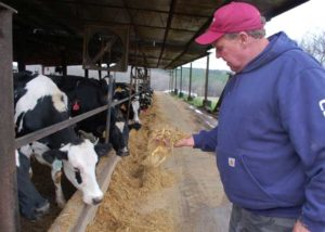 "Robert M. ""Bobby"" Jones, who owns and operates Poor House Dairy Farm near Farmville, feeds his dairy cows. Jones won one of 10 Virginia Clean Water Farm Grand Basin Awards this year. Poor House Dairy is one of several farms we plan to visit on our journey. Credit: Farmville Herald, Feb 4, 2016"