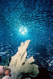 NOAA ocean scene showing coral and fishes